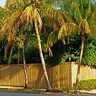Amazons in Coconut Grove by Zal Lazkowicz