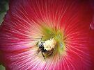 Pollenated! by Karen Karl