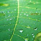 Leaf by Ryan Bird