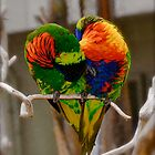 Love Birds by Richard Stephan Bergquist