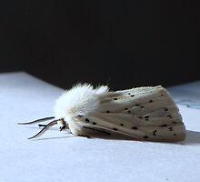 White Ermine Moth by Sharon Perrett