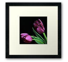 Dark Purple Tulips Framed Print