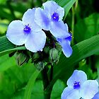 Blue Flowers by Landscapes Mainly .