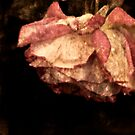 Rustic Rose by picketty
