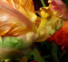 Petals of a crazy Tulip by Tanja Katharina Klesse