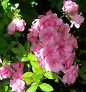 Spring Pinks - Azalea 2 by WalnutHill