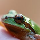 Tree Frog by Coreycw
