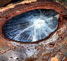 A Galaxy In A Knothole - The cover of my first photobook by Bob Wall