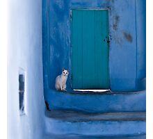 Waiting White Cat Photographic Print
