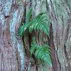 small fern on tree trunk, Kamakura, Japan by wilderpisces
