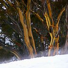 Perisher Valley Snowgums by Lorraine Seipel