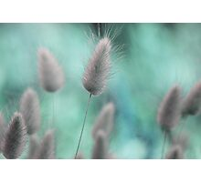 Nature's softness Photographic Print