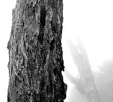 Portrait of an old mountain tree by Jeff Harris