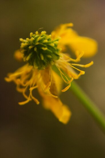 Yellow and Green (from wild flowers collection) by Antanas