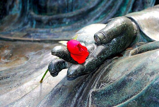 Buddha Rose by Bob Wall