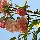 Overhead Blossoms 2 by Bob Wall