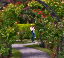 Afternoon in Boston Rose Garden by LudaNayvelt