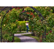 Afternoon in Boston Rose Garden Photographic Print