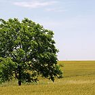 Tree In Field by Delany Dean