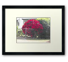 It has got to be Red. Framed Print