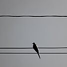 Bird on a Wire by TickerGirl