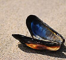 Mussel Shell by Bob Wall