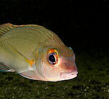 Fish by Marcel Botman