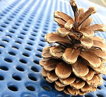 Pinecone by Dawn Palmerley
