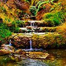 Rutledge Creek by Phil Thomson IPA