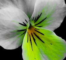 GREEN PANSY by SIMON KEEPING