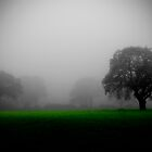 MISTY MORN by SIMON KEEPING