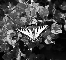 Flutter By - BW by EliTynan