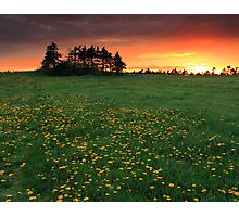 Dandy Sunset Photographic Print