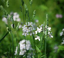 Beyond the grass by lilcanuk