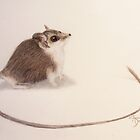Long-tailed Dunnart by angieschlauch