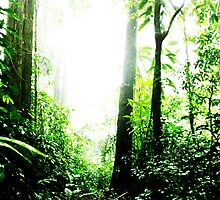 The Brazilian Atlantic Rainforest by 1001pawprints