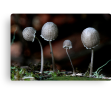 Fungi Season 24 Canvas Print