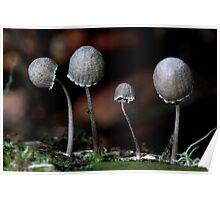 Fungi Season 24 Poster