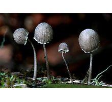Fungi Season 24 Photographic Print