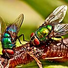 BOTTLE FLIES by Sandy Stewart