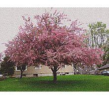 Visual Texture Crab Apple Tree Photographic Print