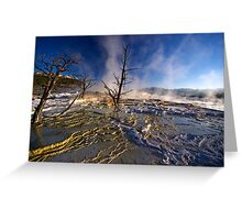 Mammoth Hot Springs - Catching Rays Greeting Card
