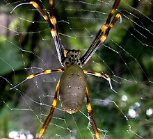 An Arachnid   by Patty Boyte