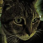 Dragon my old cat by Jeff Notti