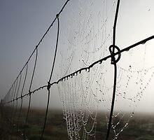 The Fence by Pene Stevens