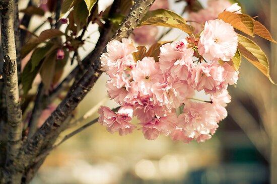 Springtime Warmth by Designsbytami