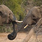 OK, let's shake trunks on it! by Erik Schlogl