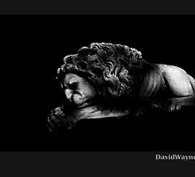The Lion Sleeps Tonight by DavidWayne