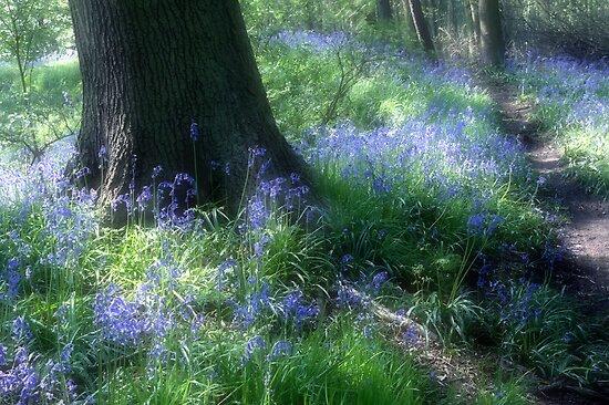 Bluebells by Ann Garrett