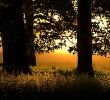 A Glimmer Of Light  by CJTill